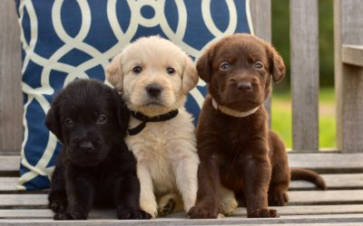 Come visit and choose your puppy!